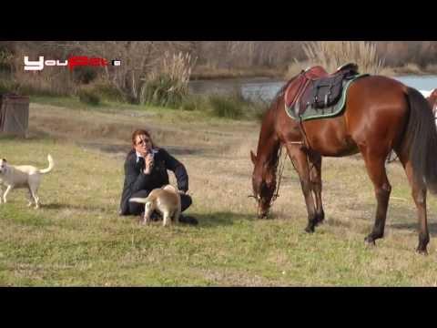 A cavallo sul lago di Martignano