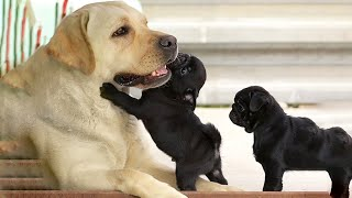 AWW CUTE BABY ANIMALS Videos Compilation Funniest and cutest moments of animals - OMG So Cute #23