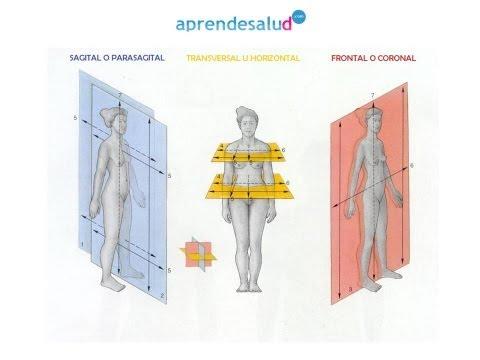 Preguntas EIR Comentadas y Desglosadas de Anatomofisiología