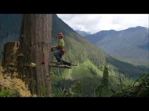 Takto sa pília stromy v Kanade