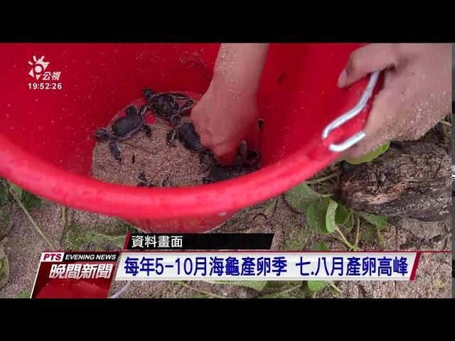 墾丁沙灘小綠蠵龜孵化 海巡等人員幫助返海