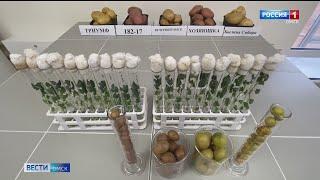 В Омском аграрном центре создали новые сорта картофеля