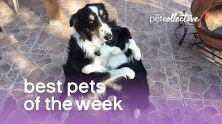Best Pets of the Week   March 2018 Week 1