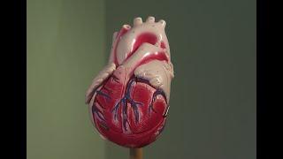 Heart Health Tips For Women