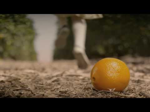HungryPests Orange 15 second TV Ad