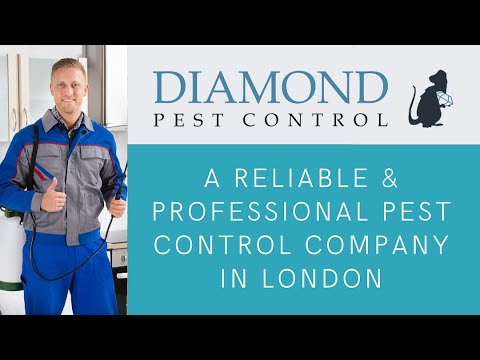 Diamond Pest Control: an Experienced, Expertly Run Business Located In London