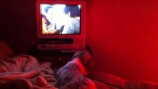 kochi japan  mini Movie appreciation of midnight