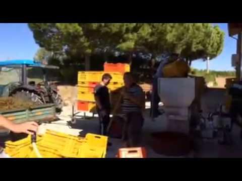 "Paul Angelini, Winemaker ""Time to make the wine"", 2013 Angelini Estate Merlot"
