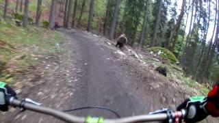 Bikers Rio Pardo | Vídeos | Urso ataca ciclista em um Bikepark