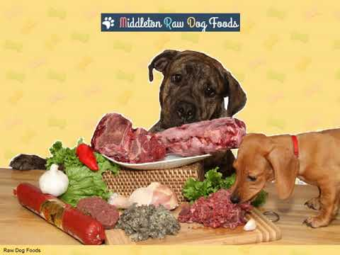 Raw Diet Foods for Dogs