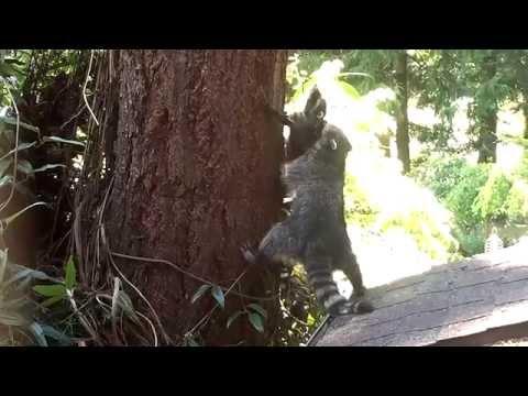 Kako se popeti na drvo?