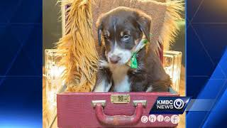 KC Pet Project shows off puppies up for adoption