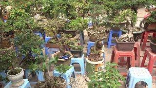 Bác Lập nhiều cây đẹp, báo giá linh sam đẹp hợp lý - beautiful bonsai  at the bonsai market