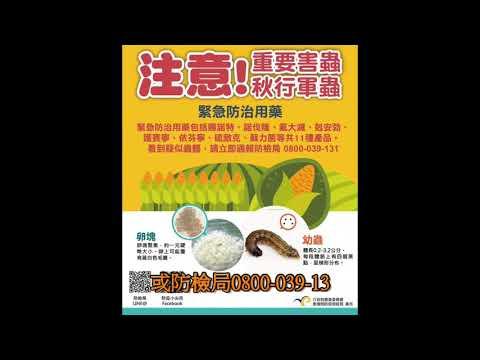 1080611 海棠聽新聞~宜蘭發現疑似『秋行軍蟲』現蹤 請鄉親們小心防範