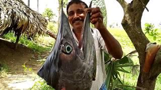 10 KG Swordfish Head Curry - Worlds Largest Fish Head Curry In My Village - Village Food Village