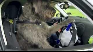 Hundefahrschule in Neuseeland