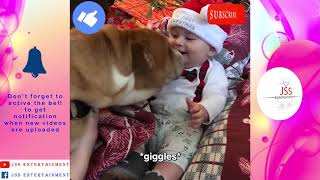 Animals funny moments Babies cracking over dogs, Baby chick stand up to dog& more JSS Entertainment