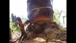 Underbid Tree Job