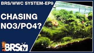 Ep9: Best nitrate and phosphate level for a reef tank ?  - The BRS/WWC System