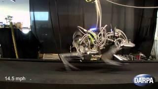 DARPA's Robotic Cheetah Sets Speed Record for Legged Robots