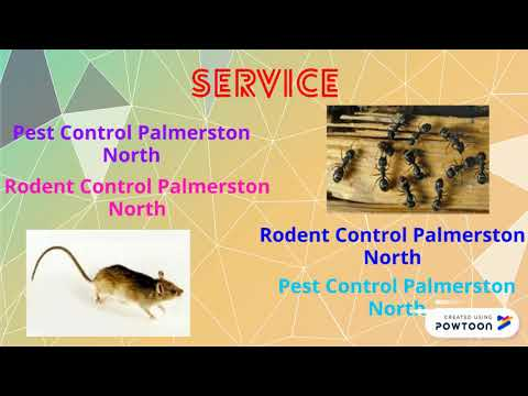 Professional Ant Control in Palmerston North