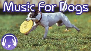 Dog Music Therapy! Relax Your Dog with 2 Hours of Soothing Classical Music! (2019!)