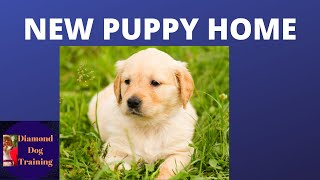 A NEW PUPPY - PT 2 - How to prepare, what to buy, what to do!