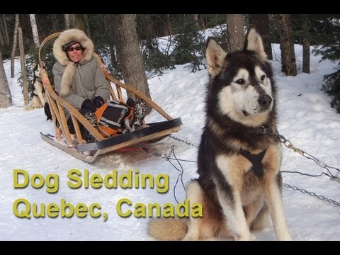 3D Dog Sledding - Our Next Adventure by AdventureArt