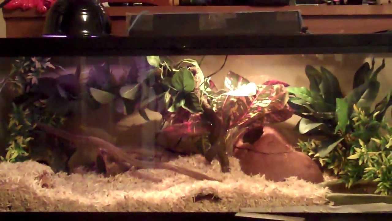 Finished Corn Snake Setup Youtube