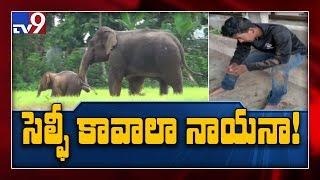 Man tries to take selfie with elephant herd landed in mud ..