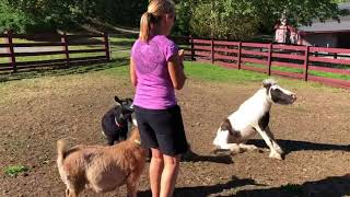 Einstein and the Goats in the Morning