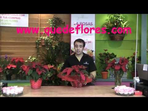 Flores de pascua y Jarrones de flores para Navidad Quedeflores.com