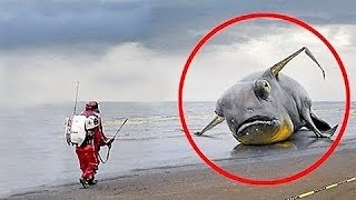 UNBELIEVABLE Items Found After Tsunamis !