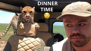 Tik Toks Hilarious Pets That Will Make Your Day Better 😍 | Fluff Planet