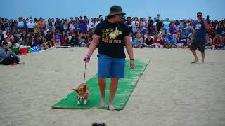 BEST MOMO CONTEST AT CORGI BEACH DAY  SUMMER 2018