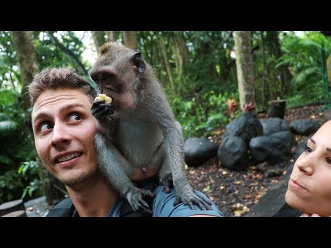 BALI - THINGS TO DO IN UBUD (Ubud monkey forest, Tegalalang rice terraces)