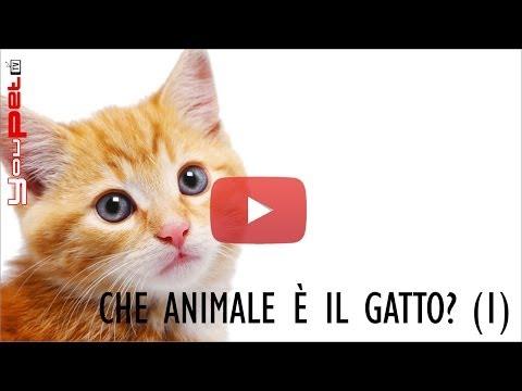 Che animale è il gatto? (prima parte)