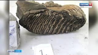 В Омске вынесли приговор двум мужчинам, которые пытались продать кости мамонтов