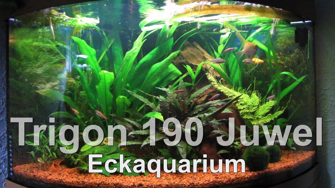 trigon 190 juwel aquarium youtube. Black Bedroom Furniture Sets. Home Design Ideas