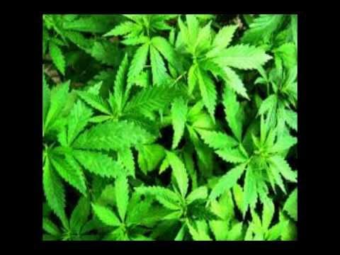 Baixar ConeCrewDiretoria - Sem a Planta