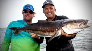Cobia Fishing with Ultra light Spinners! {Catch Clean Cook} Insane Cobia Sushi ROLL!!