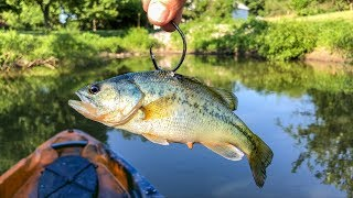 Using GIANT LIVE BAIT for POND MONSTERS!!! (Live Bass as Bait!?)