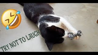 Cat Video TRY NOT TO LAUGH 🤣