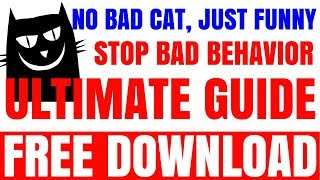 Super Funny Cats Videos Compilation 498 | Funny Cats - A Funny Cat Videos Compilation 2015