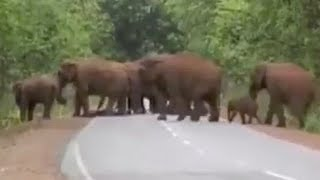 Elephants weep as they carry dead baby in funeral processi..