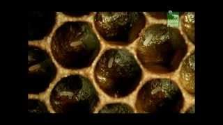 Včely zabijáci