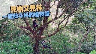 我們的島 見樹又見林 一堂殼斗科的植物課(第989集 2019-01-21)