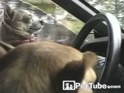planets funniest animals youtube - photo #8