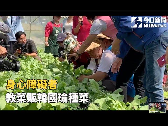 影/甩豪宅風波 身心障者教韓國瑜種菜拔菜