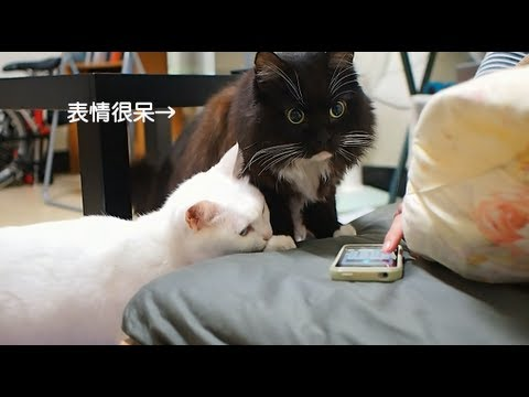 petit chat marrant video